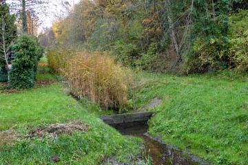 Vorne ist gemäht, hinten rein gar nicht. Der Wasserfluss ist stark gehemmt. Und als wünschenswertes Biotop ist das einfach zu viel und der Graben zu eng.