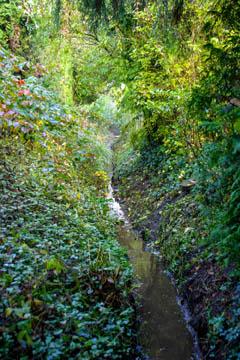 Ein sehr schöner Dschungel. Aber auch da gehört ein Schauweg hin, solange der Dschungel im Verbandsgebiet liegt. Für afrikanische Dschungel fordern wir keinen Schauweg.